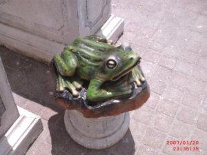 Kurbağa Maketi