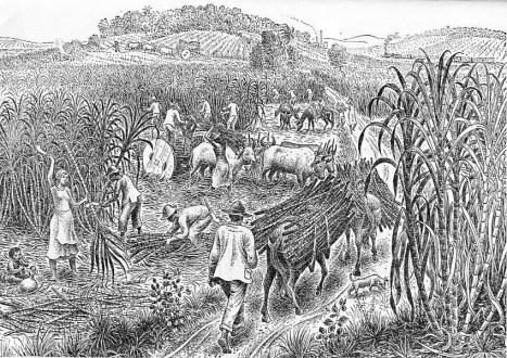 Ilustração em preto e branco de trabalhadores colhendo cana.