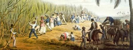 Escravos cortando cana. Nota-se que tanto homens e mulheres exerciam tal tarefa, pois erroneamente pensava-se que apenas os homens cortavam cana, embora que na maioria das vezes eram os homens que trabalhavam no canavial.