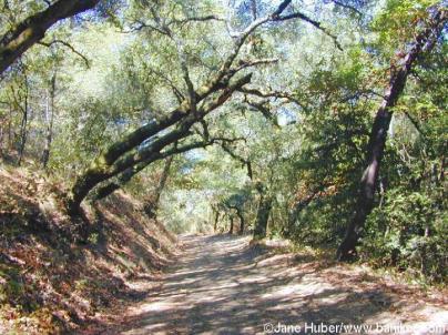 Mt Madonna, CA trail