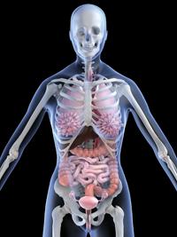 El sorprendente número de nuestros órganos que son prescindibles
