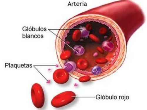 Los científicos descubren una enzima que puede cambiar el tipo de sangre de una persona y convertirla en donador universal