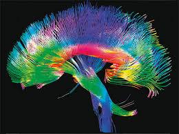 Nuevo mapa del cerebro refleja 97 áreas de la corteza cerebral hasta ahora desconocidas