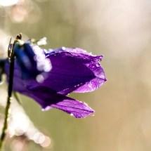 Blüte mit Bokeh