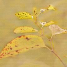 Blätter-in-Gelb
