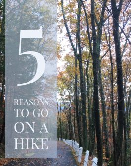 5 Reasons to Go For A Hike