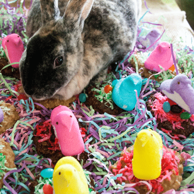 No Bake Cookie Easter Peeps Nests at Bake It With Love, www.bakeitwithlove.com