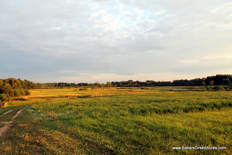 Hay and Philosophy: Thoughts on Homesteading and Farming