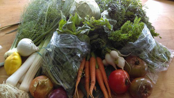Homesteader's Guild CSA veggies, chemical free