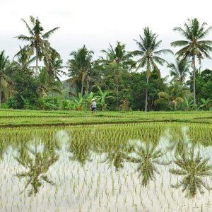 Indonesian rice fields by Baki Clothing Company