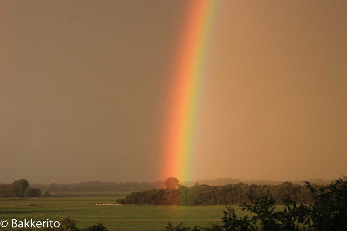 Rainbow starting in meadow