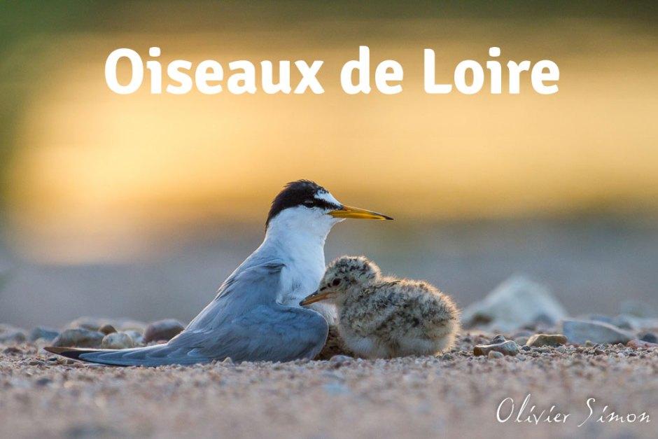Oiseaux de Loire