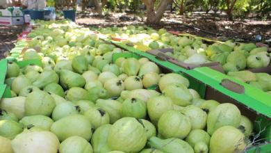 صورة بينت يمنع دخول المنتجات الزراعية الفلسطينية لإسرائيل