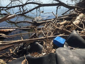 Litter on the Potomac