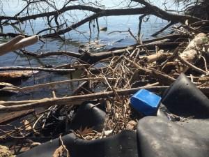 Litter on the Potomac