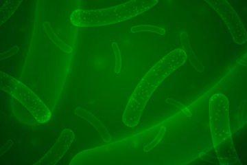 probióticos Covid