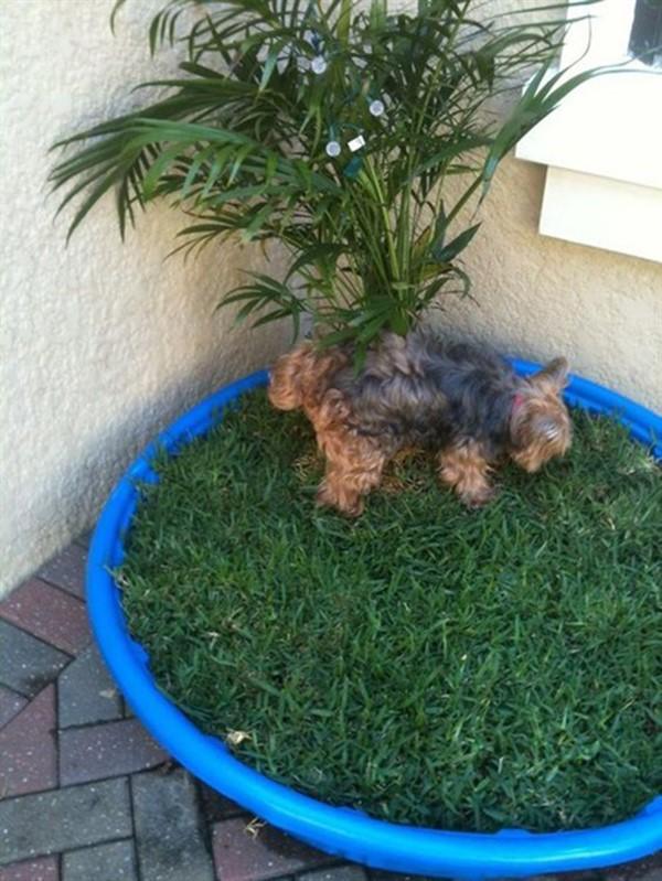 apartment patio dog potty online