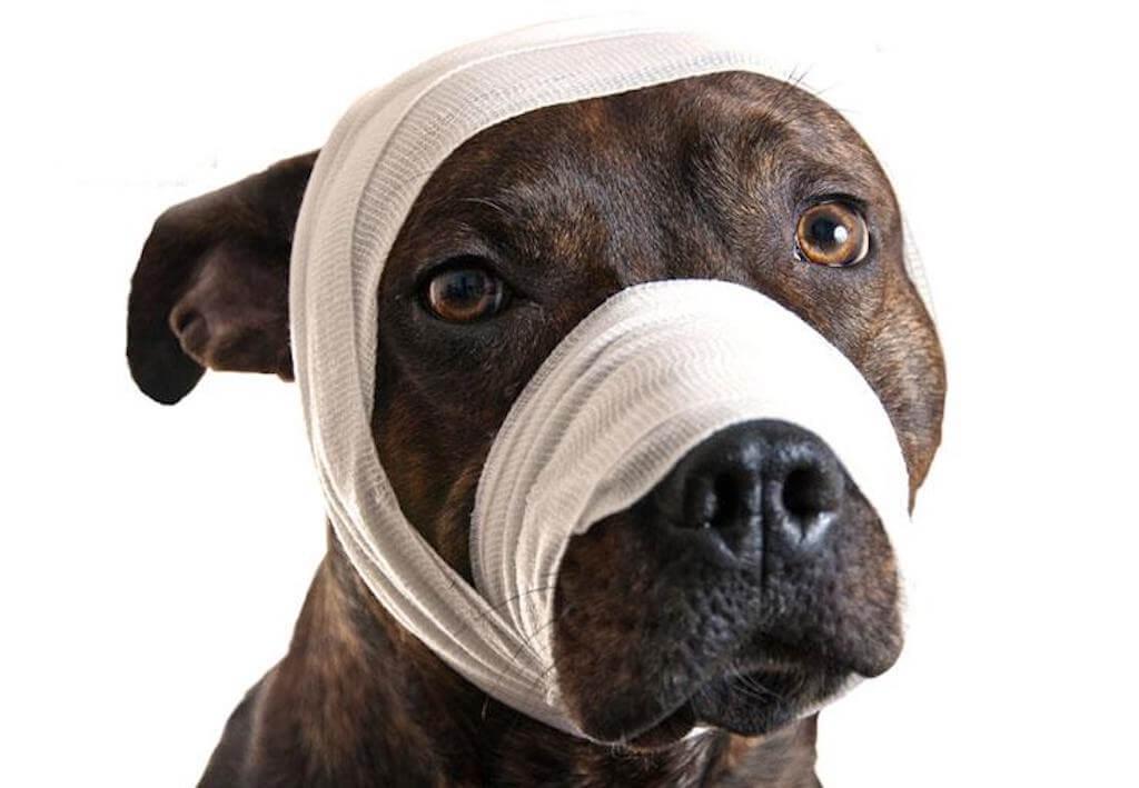 bandaged-head-emerg1024