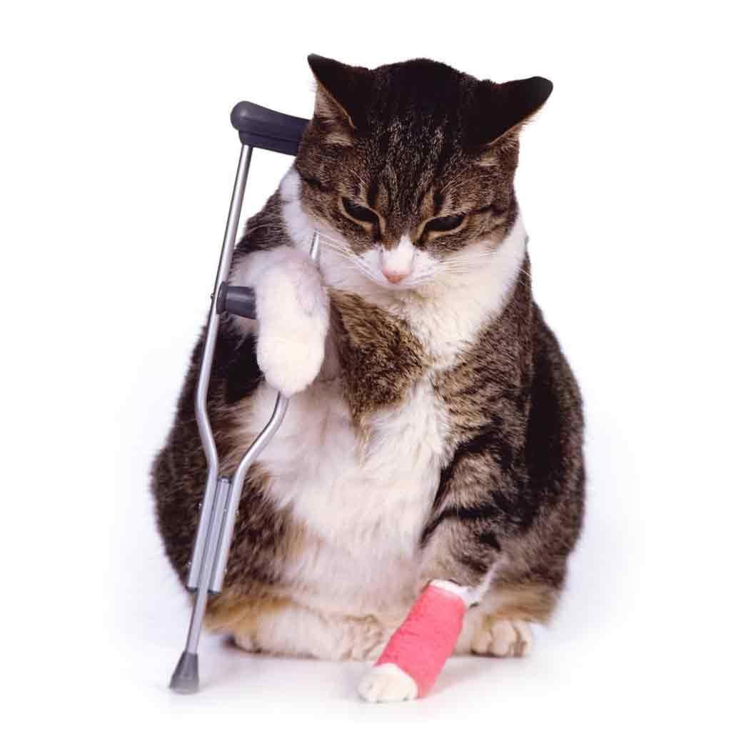 cat_crutches-asc1024sq
