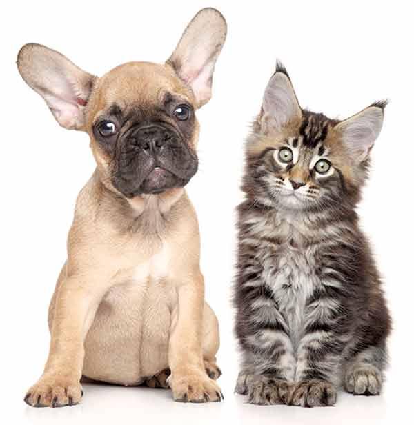 pup-kitt600web