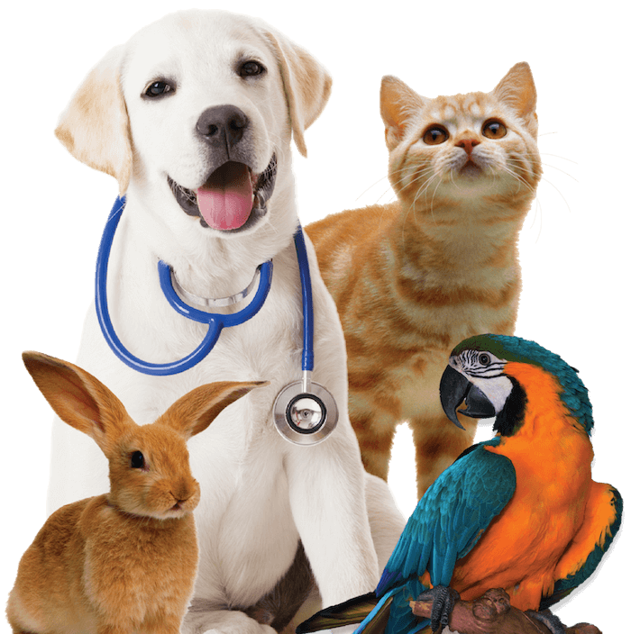 4xfamily-pets700png