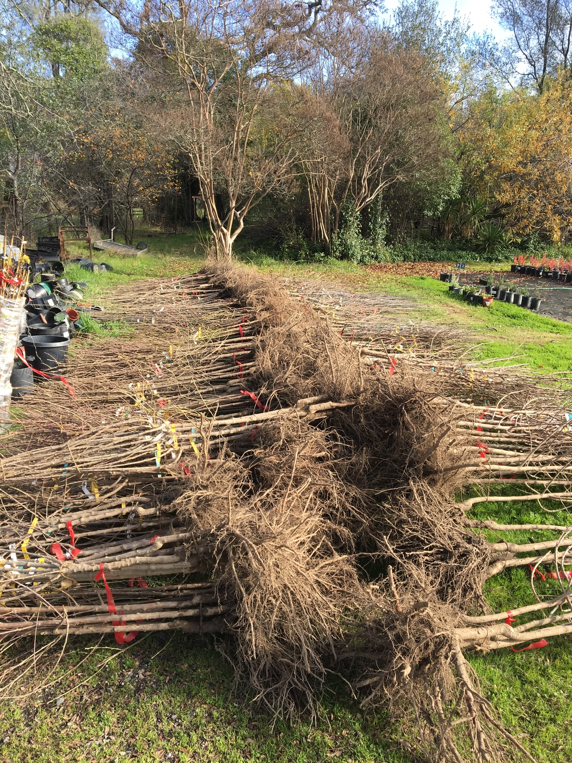 Fruit Tree Wood For Sale