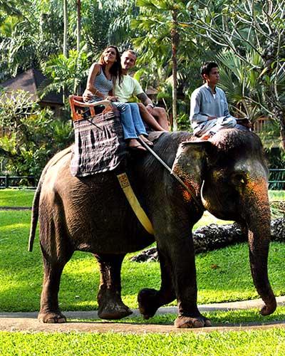 balade-elephant-1