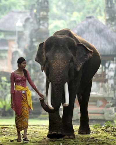 Balade à dos d'éléphant à Bali