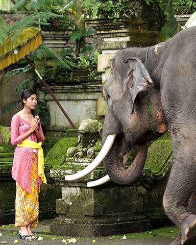 balade-a-dos-d-elephant en famille à bali