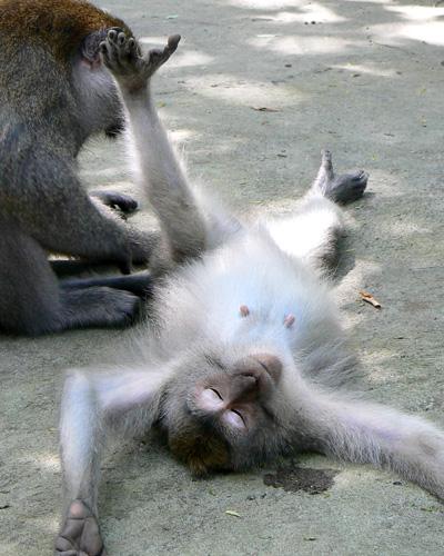 ubud-monkey-forest-2