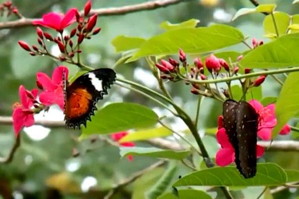 tabanan-papillon-bali