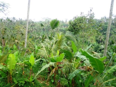 Land for sale in Ubud - LUB169