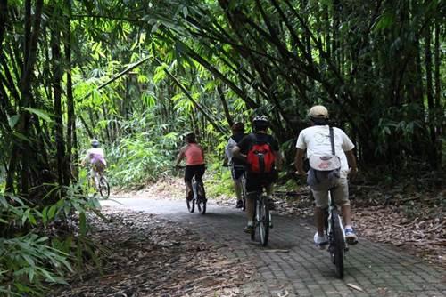 Bali Penglipuran Cycling Tour - Link to Page 110217