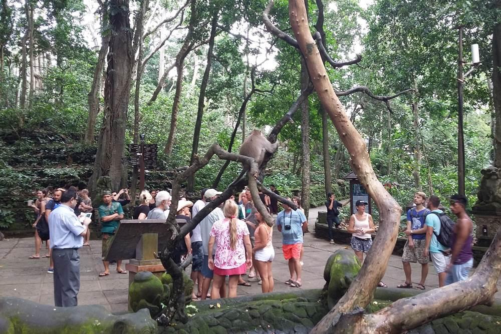 Bali Kintamani and Ubud Full Day Tour - Gallery - 06280217