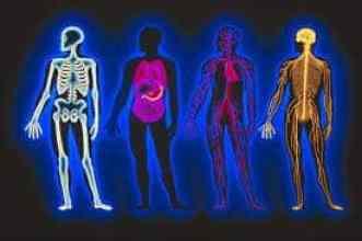 Images d'os, d'organes et de muscles du corps. Etudier l'anatomie et la physiologie à Bali BISA, Sanur
