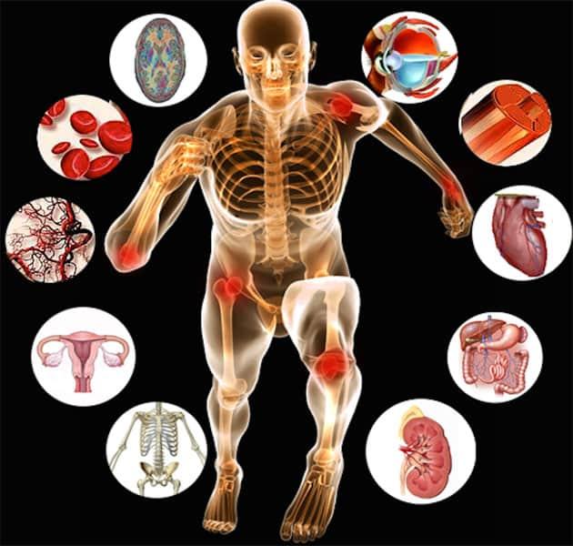 CIBTAC Anatomy and Physiology Diploma - study at Bali BISA