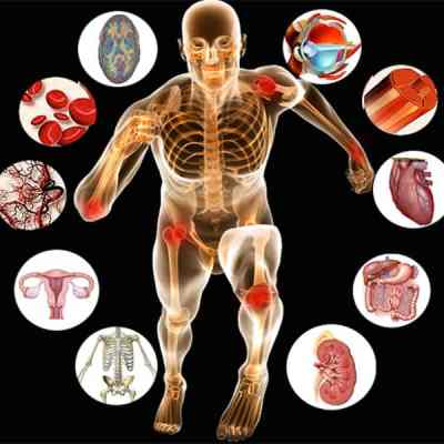 CIBTAC anatomy and physiology Diploma course in Sanur, Bali