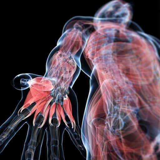 Level 3 Certificate in Anatomy, Physiology and Pathology for ...