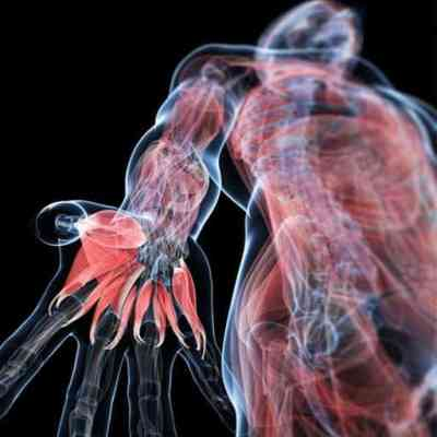 ITEC anatomy, physiology, pathology for Complementary Therapies Certificate by ITEC course offering