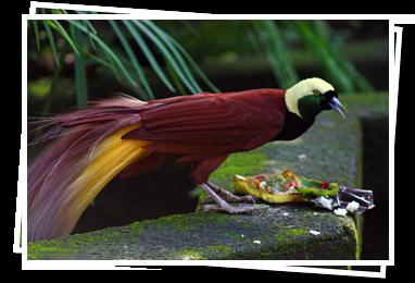 Ubud and Bali Bird Park