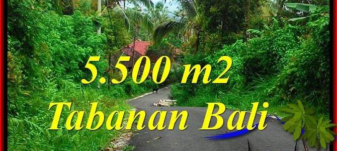 FOR SALE 5,500 m2 LAND IN TABANAN BALI TJTB323