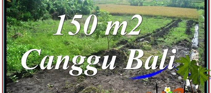 Beautiful PROPERTY LAND SALE IN Canggu Pererenan BALI TJCG213