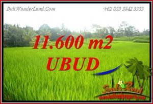 Affordable 11,600 m2 Land sale in Ubud Bali TJUB732