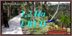 Beautiful Property 12,000 m2 Land in Ubud Tegalalang Bali for sale TJUB740