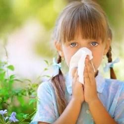Atasi Alergi dengan Herbal