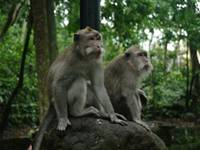 Monkey Forest at Ubud