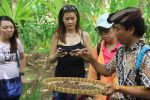 bali coffee plantation, bali coffee plantation tour, coffee plantation tour