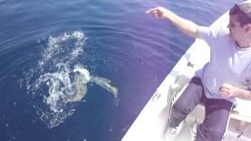 Balon Balığı ve Yeme Refleksi