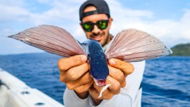 Fish that FLY! Flying Fish Catch, Clean and Cook!