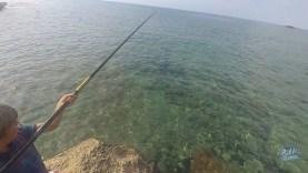 Oğlumun ilk sokan (sokar) balığı avı